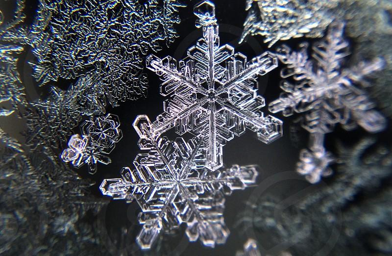 crystal snowflakes photo