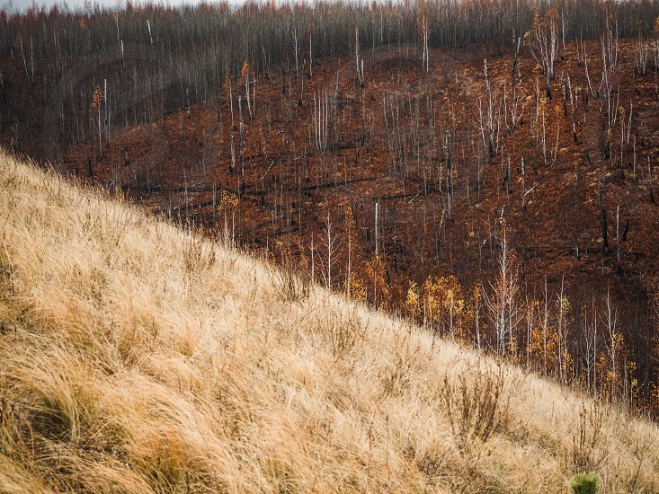 autumn color height slide climbing hill Russia Siberia tourism traveler traveler tourist tourist tree wood timber firewood forest photo