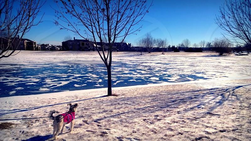 My dog by a lake. photo