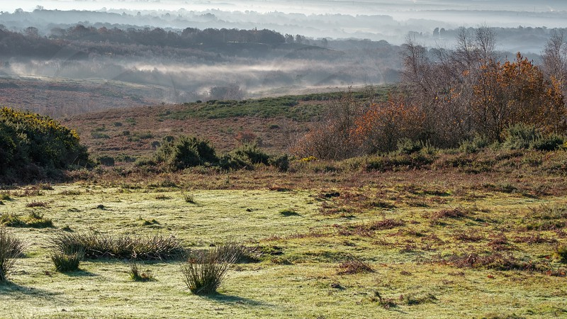 Misty morning in the Ashdown Forest photo