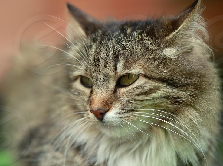 street cat photo