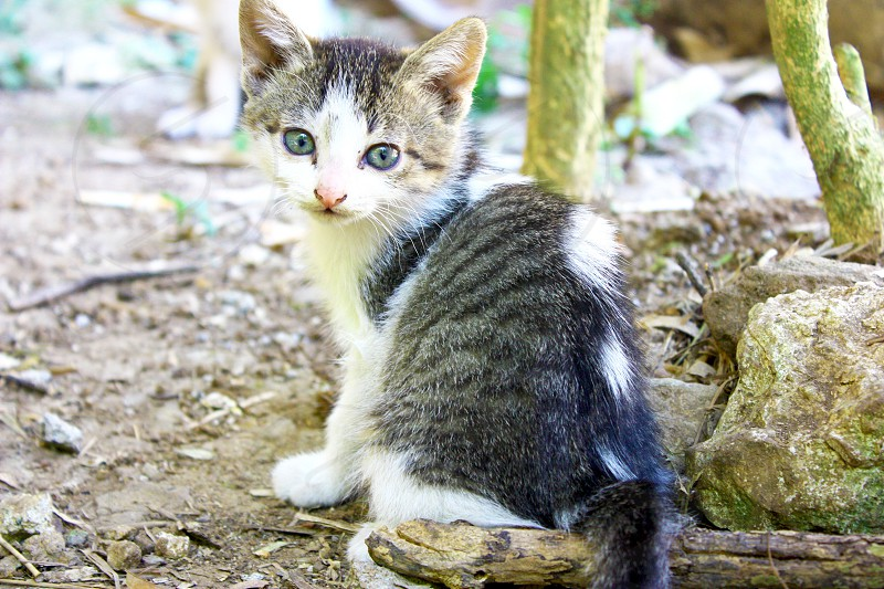 Kitten kitty cat green eyes  photo