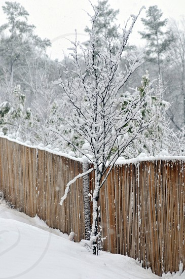 Tree and fence in the snow photo