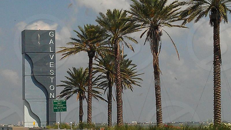 Beach life. Palm trees. Sea side.  photo