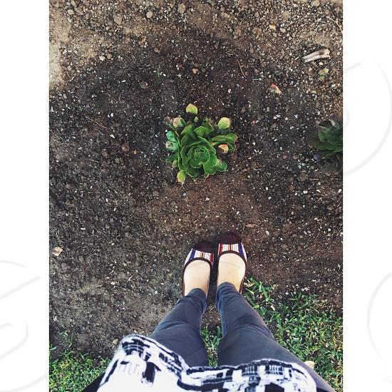 person standing over plant photo