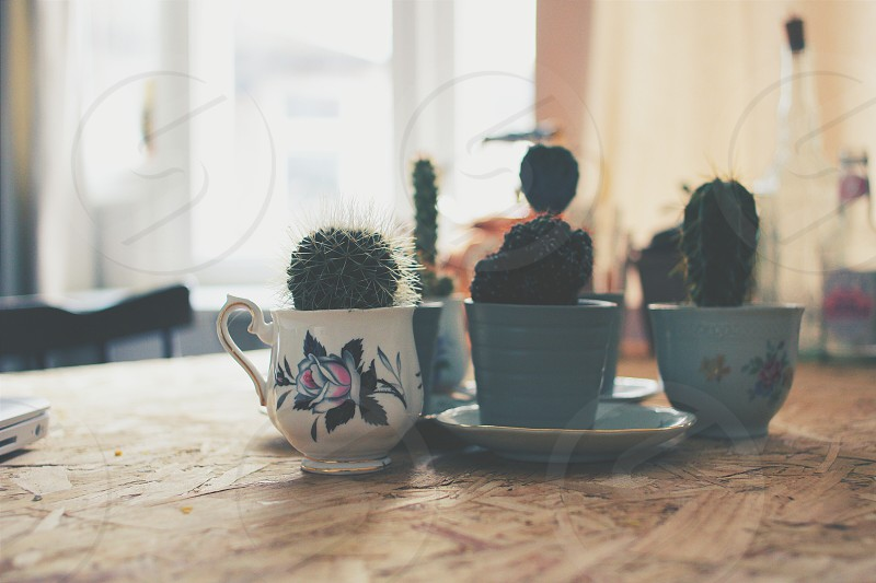 My cup of tea! photo