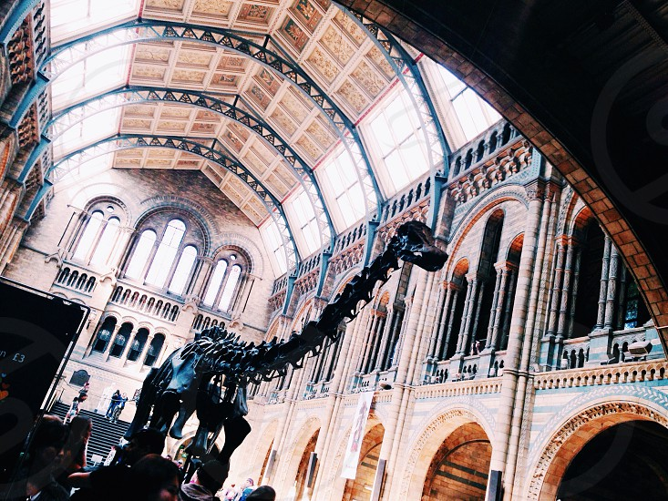dinosaur natural history museum London  photo