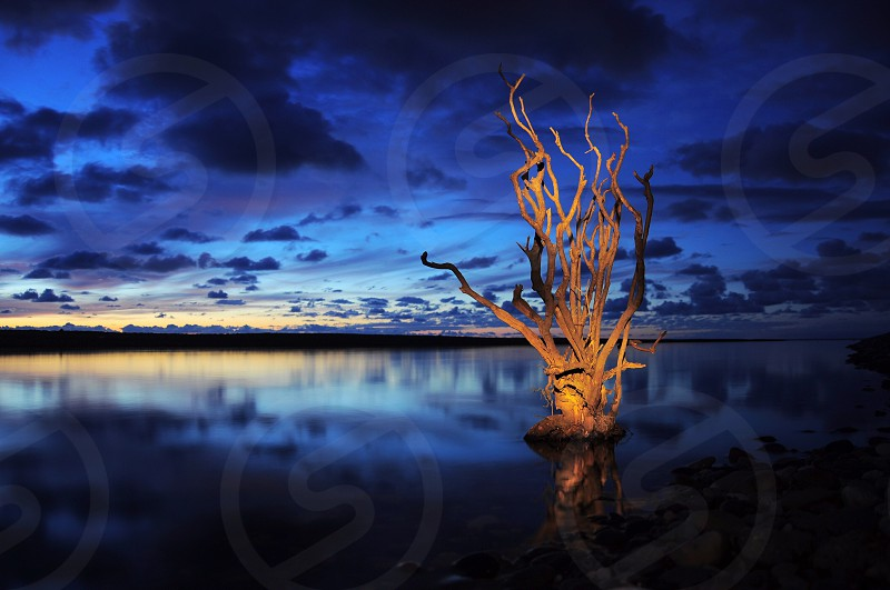 brown tree in the middle of water photo