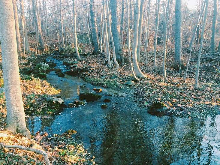 National park stream among naked branches in the sunset golden light photo