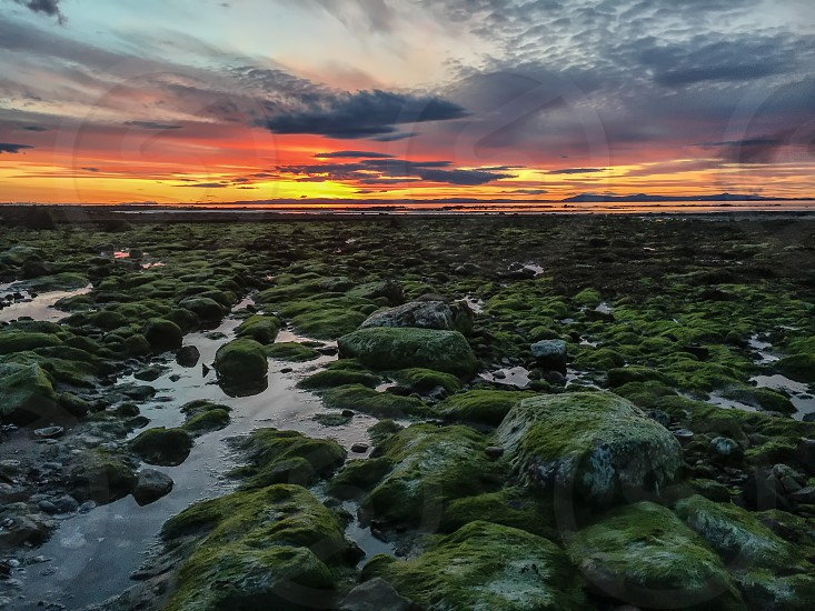 Golden sunset over mossy rocks at low tide. Scotland. photo