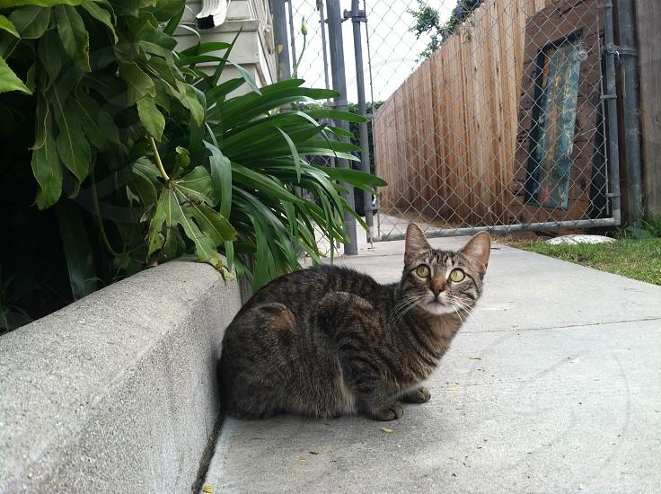 Coy Cat photo