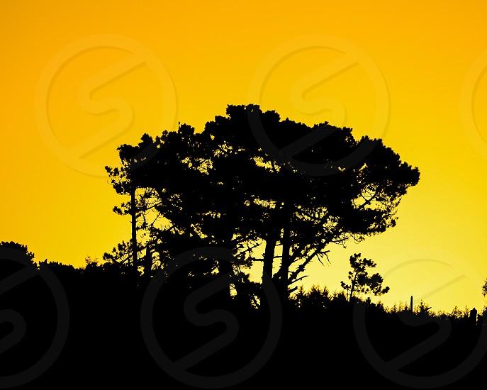 Waking up to Sunrise photo