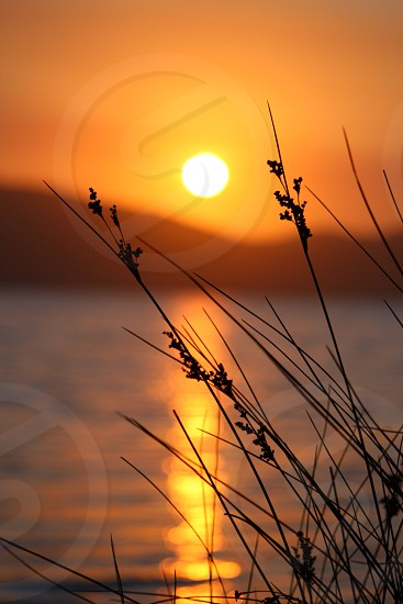 Reeds in the lake sunset photo