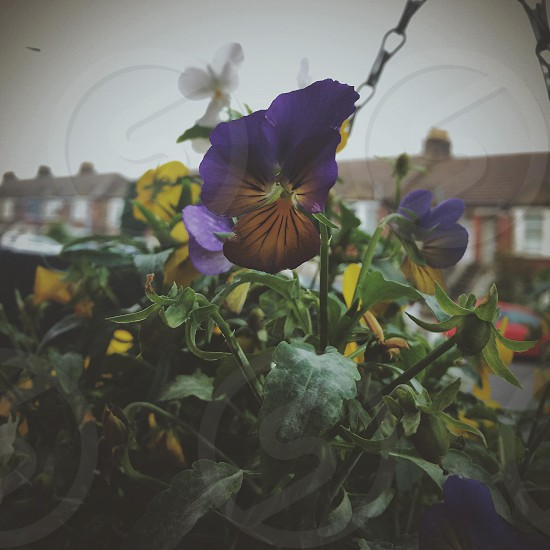 Flower in a hanging basket  photo