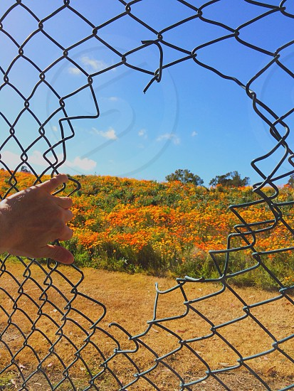 gray cyclone fence photo