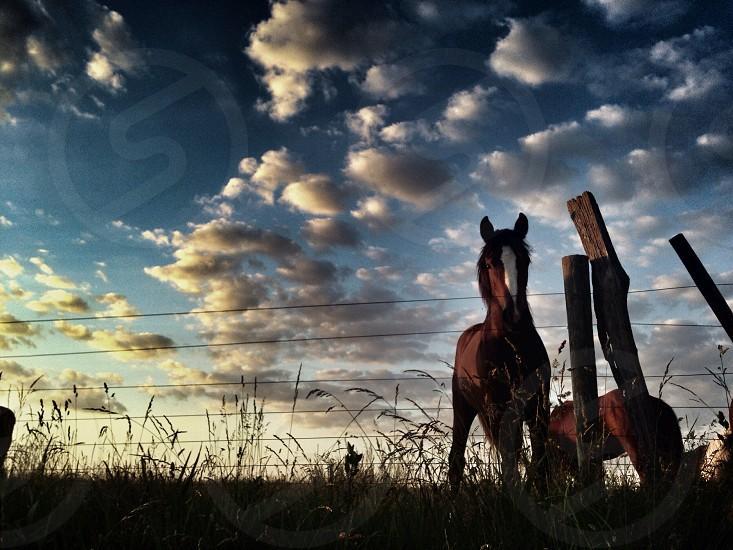 Horse during sunset photo