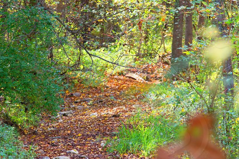 Lost Trail photo
