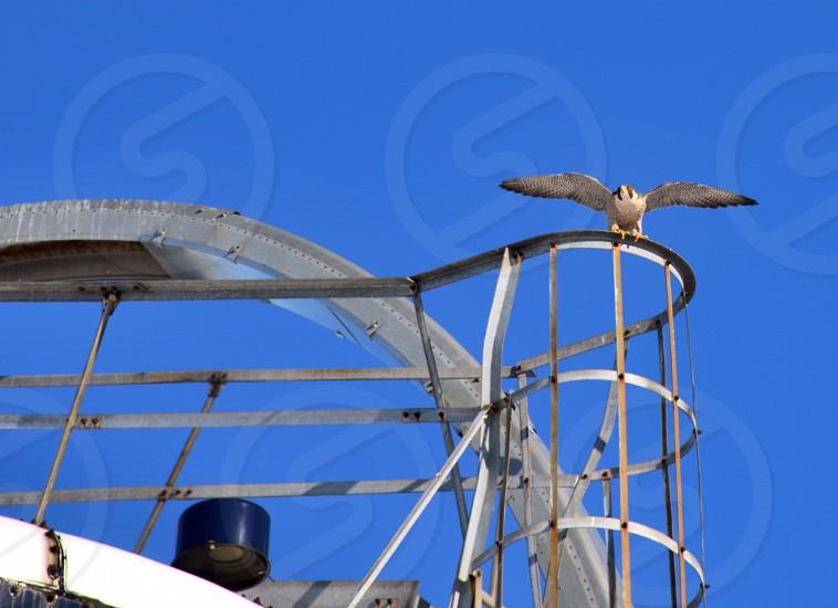 white bird on white metal frame photo