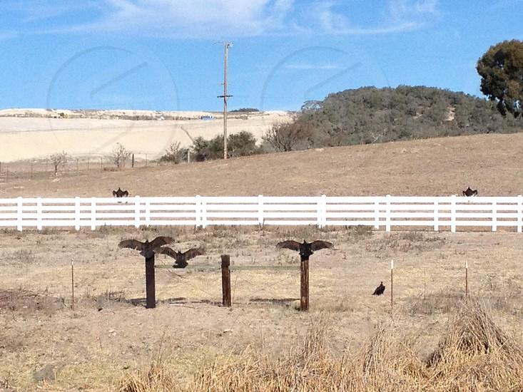 three birds on wooden fence photo