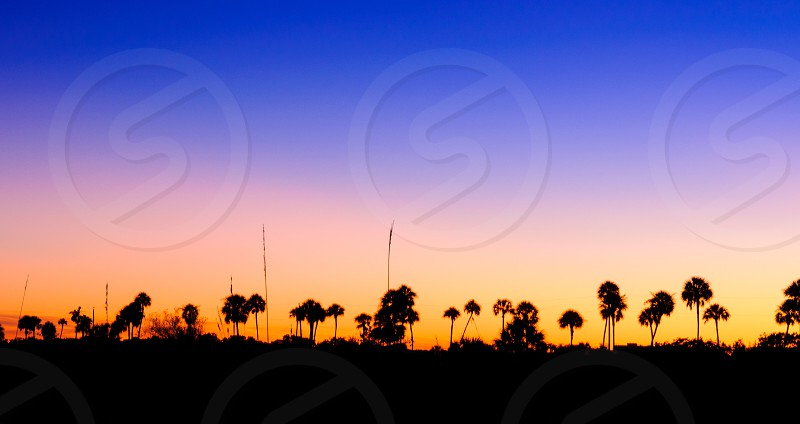 Palm silhouettes. photo