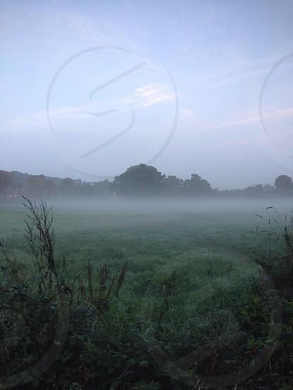 Misty field early morning mist trees tree photo
