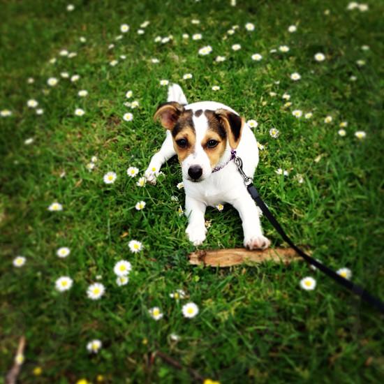 Cheeky puppy photo