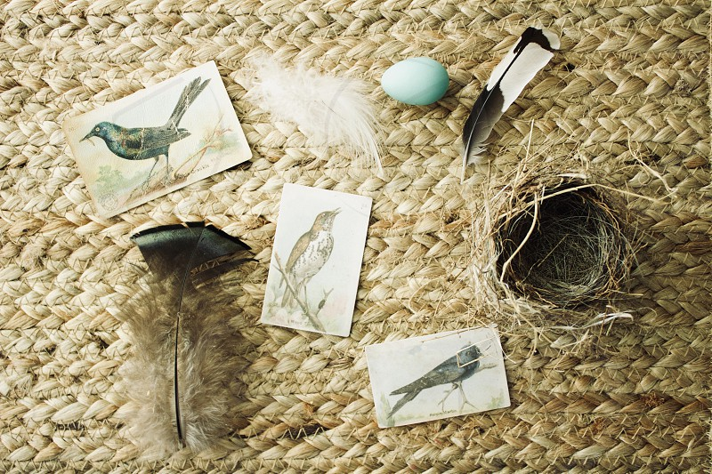 Vintage collector cards of bird species assorted feathers a tiny nest and a robin's egg on a natural woven surface photo