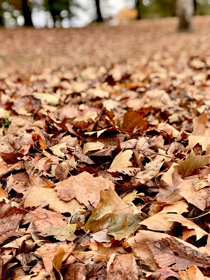 End of Autumn at Central Park NY photo
