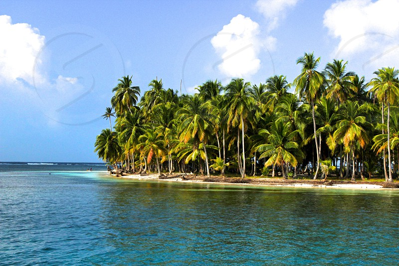 green coconut palm trees in front of beach photo