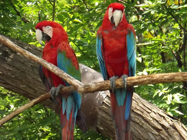 macaws at the Birmingham Zoo photo