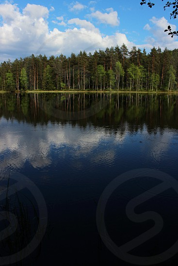 calm water with green tall trees photo