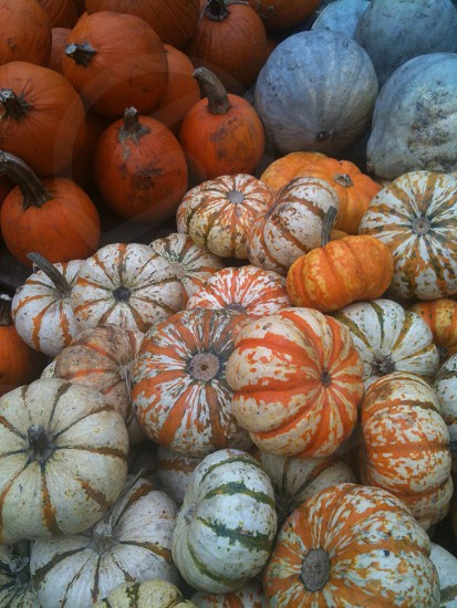 pile of pumpkin photo
