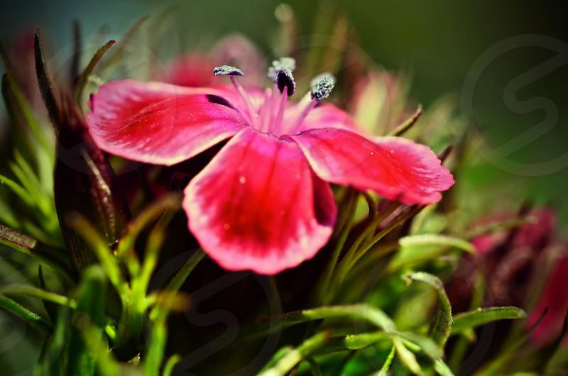 flower macro nature soft focus  photo