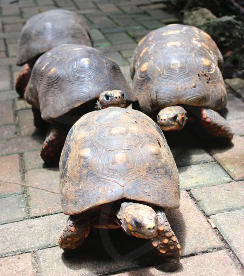 four turtles photo