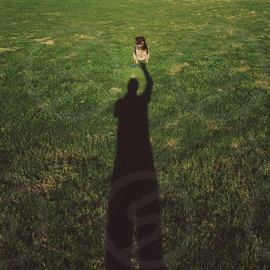 dog sitting on green grass animal photography photo