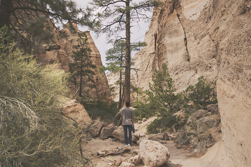 person standing in-front green leaved tree near beside mountain photo