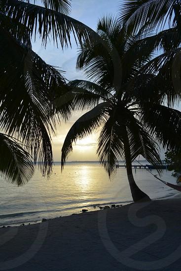 light sunset palm trees hammock ocean (lower res) photo