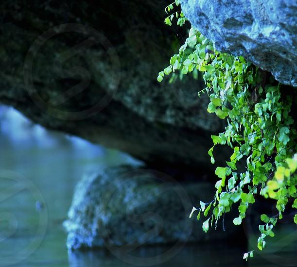 Color - natural - river - plants - Flores - flowers  photo
