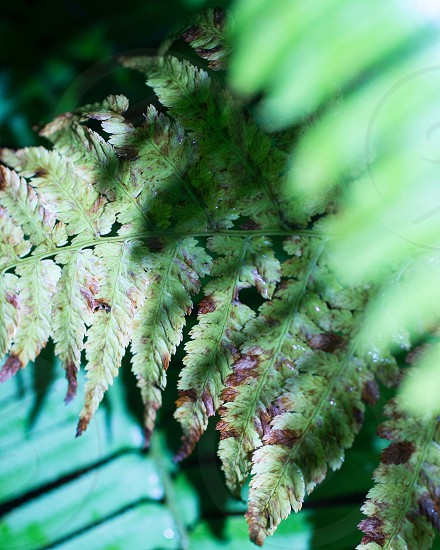 green fern plants photo