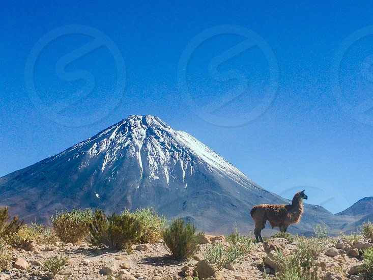 Lama mountain peak volcano licabur park national park parc chile lake glacier sunny outdoor wild wilderness massif massive rock snow ice spring wildlife animal chile bolivia photo