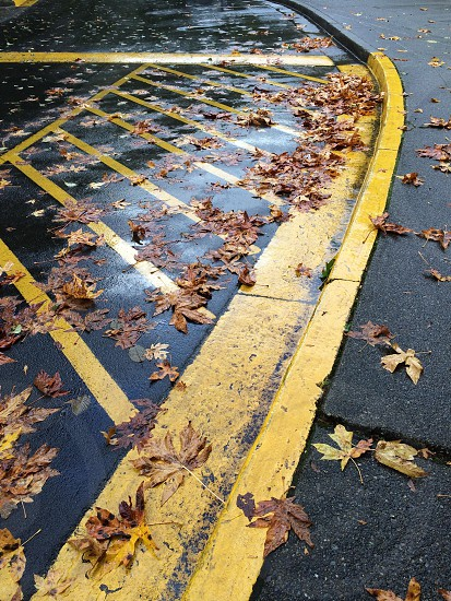 Urban fall scene.  photo