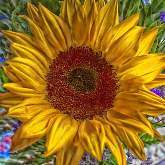 sunflower flower yellow photo