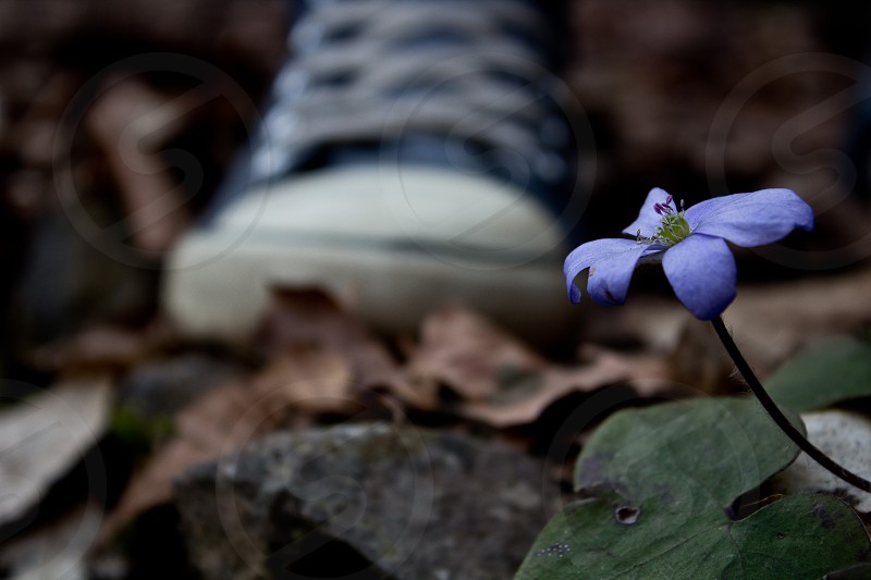 Purple flower in front of a shoe photo