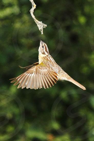 bird flight photo