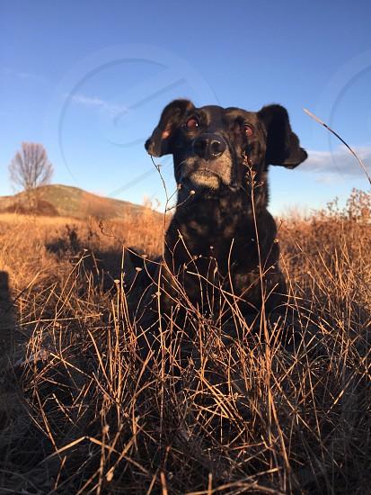 Black dog on the grass photo