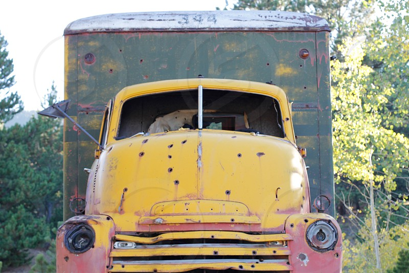 yellow red and green truck near trees photo