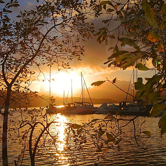 white sailboats on water at sunset photo