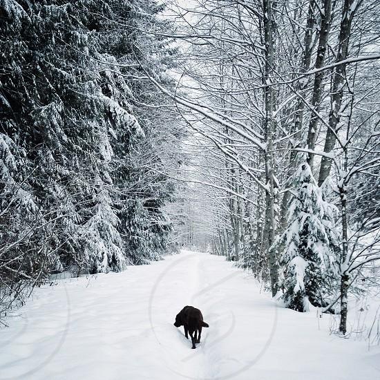 Dog walk on winter path photo