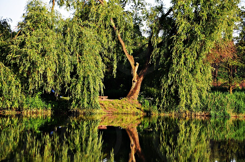 body of water near green leaf tree photo
