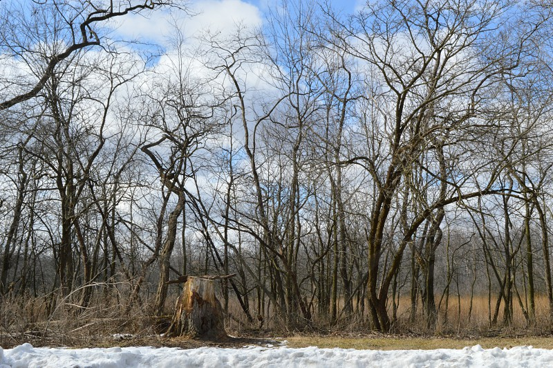 white gold clouds sun trees stump landscape nature treeline snow winter sky photo